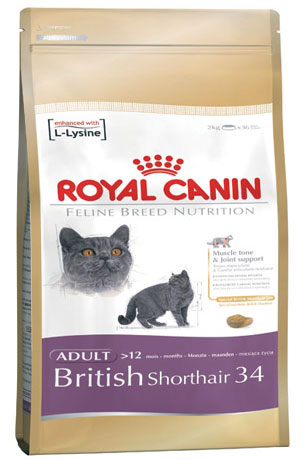 Free Sample Royal Canin Feline Breed Nutrition