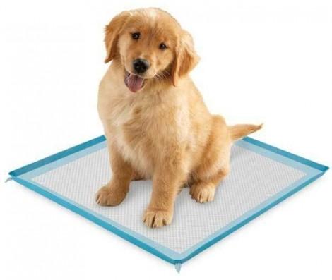 puppy-pad
